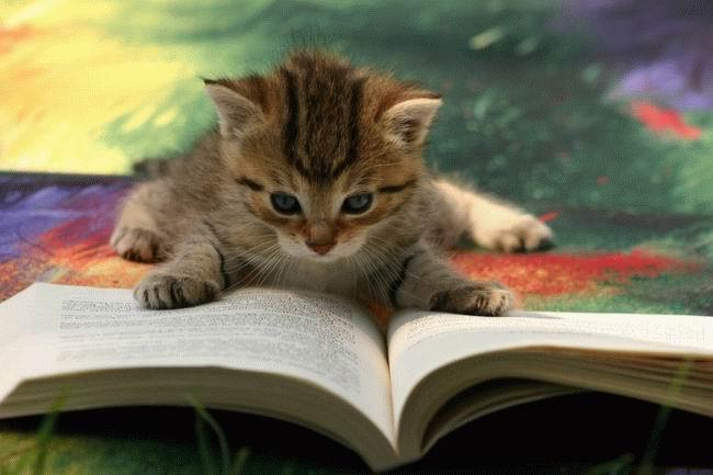 gatto_studia.jpg