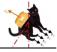 Gatto in Rotazione